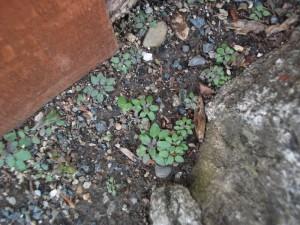 Habitat wall 4