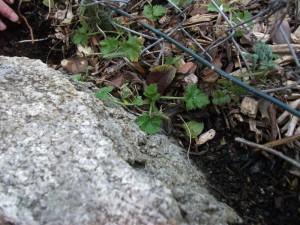 habitat wall 5