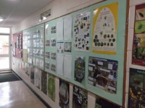 Biodiversity 002